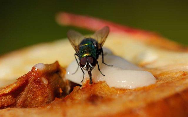 Lalat Selalu Bertindak Sebelum Berpikir