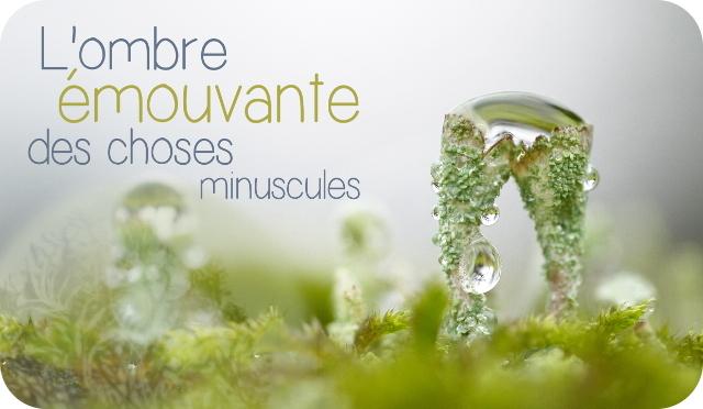 https://fr.ulule.com/lombre-emouvante/