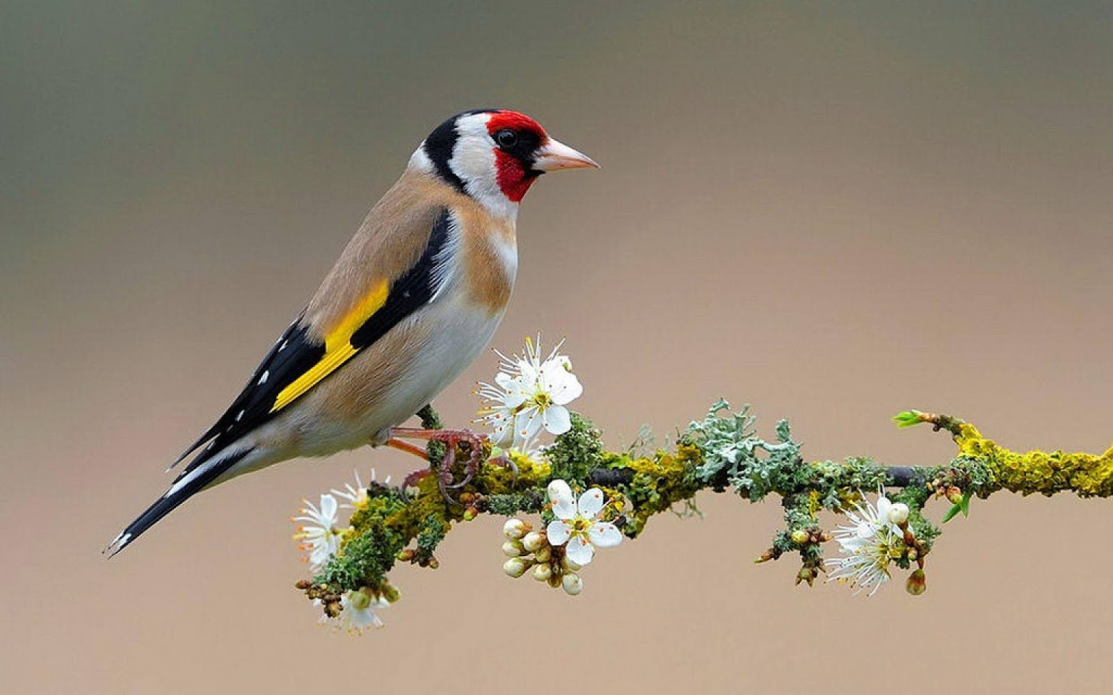 Birds Wallpapers and Backgrounds