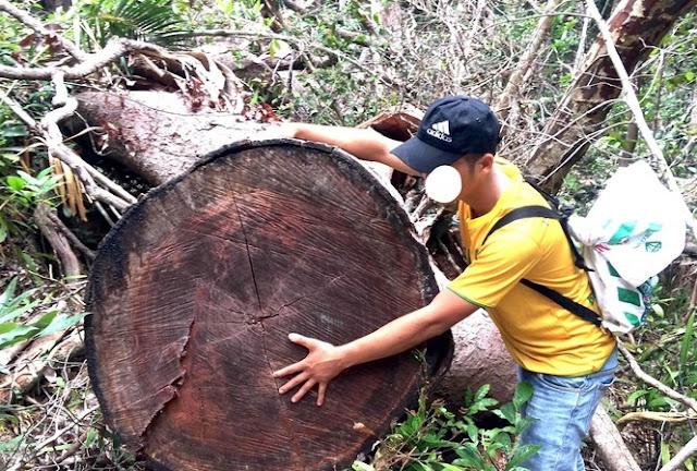 Dinh thự làm bằng gỗ đồ sộ của các quan chức là do chặt phá rừng xây nên?
