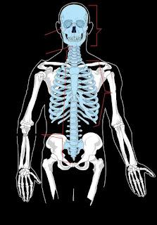 Diagram-of-human-skeletal-system-hindi