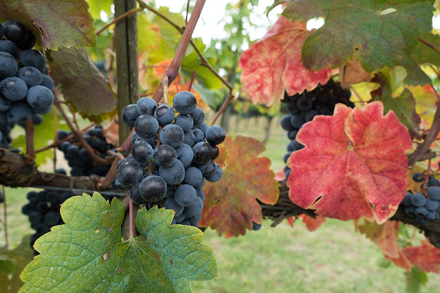 i vini della Valpolicella