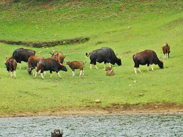 national park in tripura