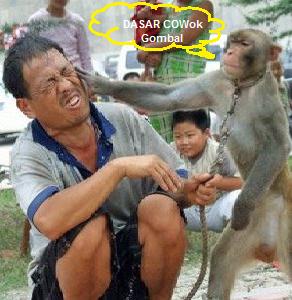 Gambar Gambar Gokil Lucu Ban Reviewed By LCD At Rating