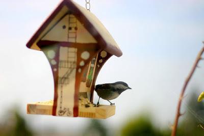 خلفيات طيور جميلة، صور طيور رائعة