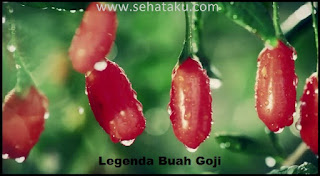 Legenda Buah Goji