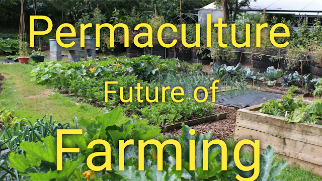 permaculture,permaculture design,permaculture garden,permaculture gardening,permaculture farm,permaculture homestead,permaculture principles,what is permaculture,school of permaculture,permaculture tip of the day,permaculture tour,permaculture tours,permaculture course,permaculture australia,permaculture principals,permaculture documentary,permaculture homestead tour,permaculture uk,permaculture video,permaculture india,jardin permaculture,permaculture nursery,permaculture no-till