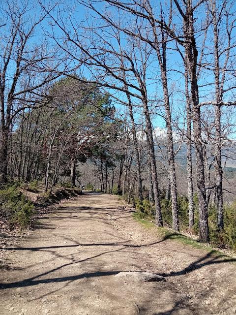 Pista forestal de acceso a las Praderas del arroyo Aguilón