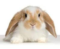 Pet Terapy Gli Esperti Consigliano Criceti Porcellini D India E Coniglietti