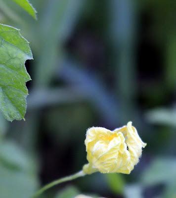 Foto Bunga Macro Dengan Camera Canon EOS 700D
