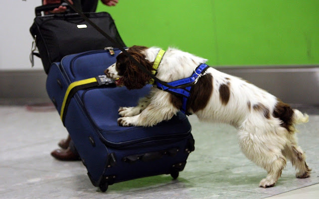 sniffer dog (the telegraph)