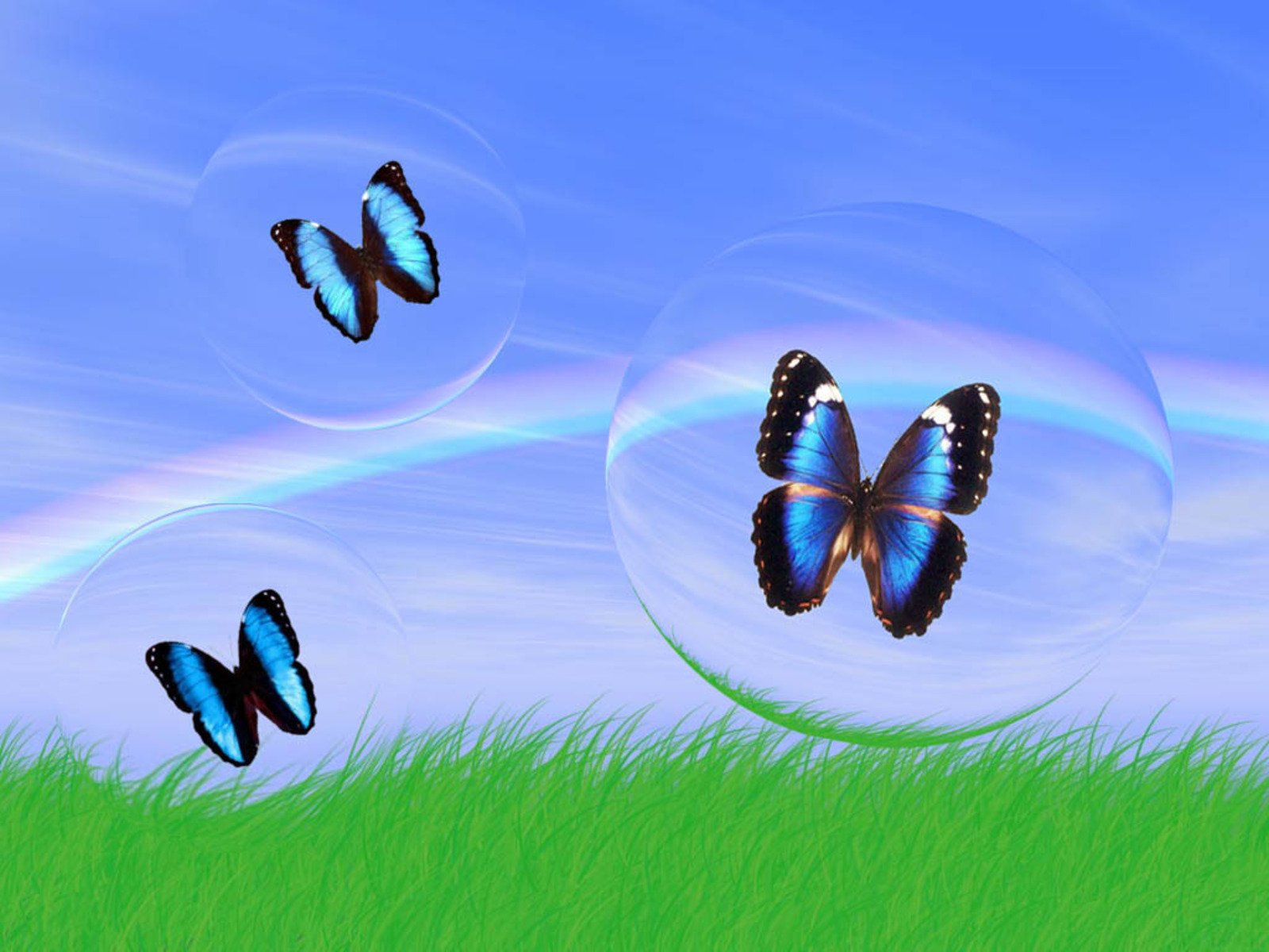 ARQUIVO DO MORTO-VIVO: Butterfly Wallpapers BORBOLETAS