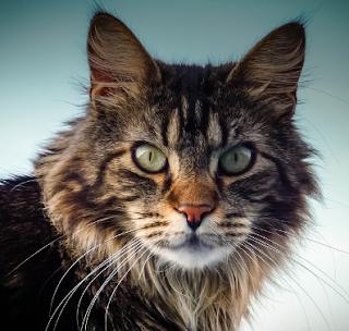 Cara Melatih Kucing Mengenal Perilaku Baik