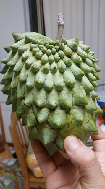 Atemoya Fruit, Alternatif Menjaga Kesehatan Badan