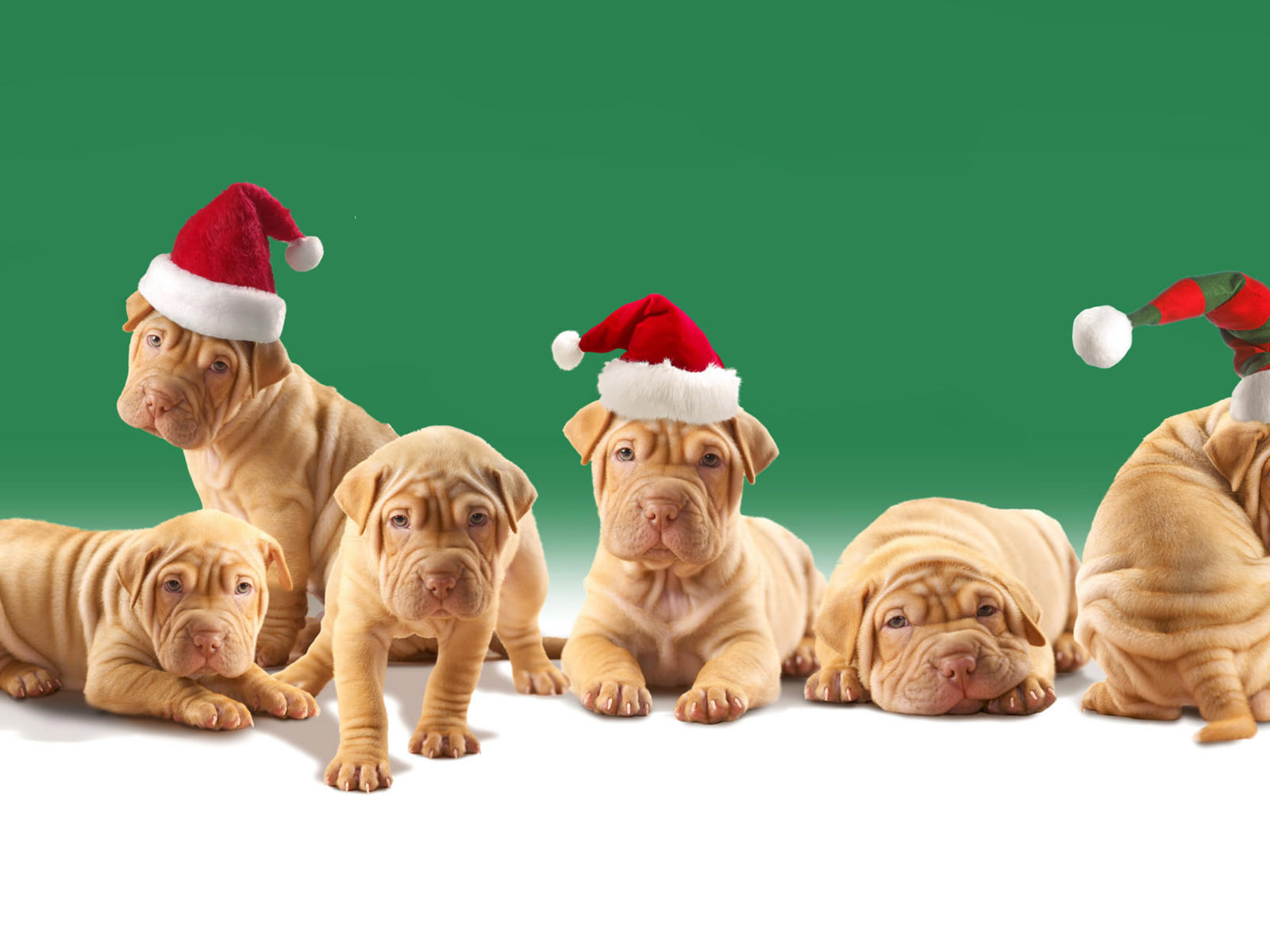 Animals Zoo Park Cute Dogs Wallpapers For Desktop Cute: Animals Zoo Park: 5 Christmas Puppies Wallpapers
