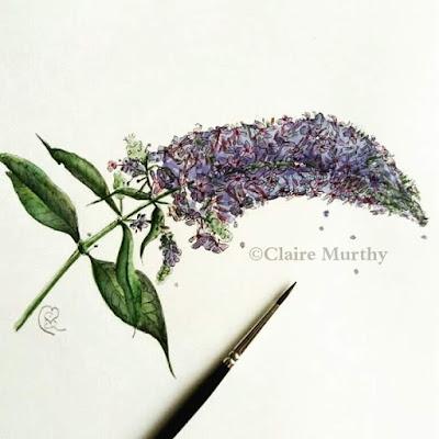 illustration of buddleia botanical art