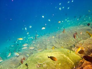 biota laut gili nanggu
