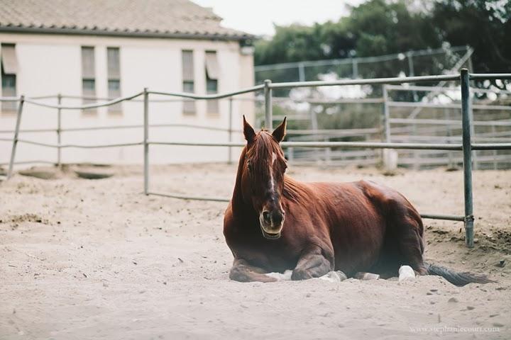 horses-golden-gate-park