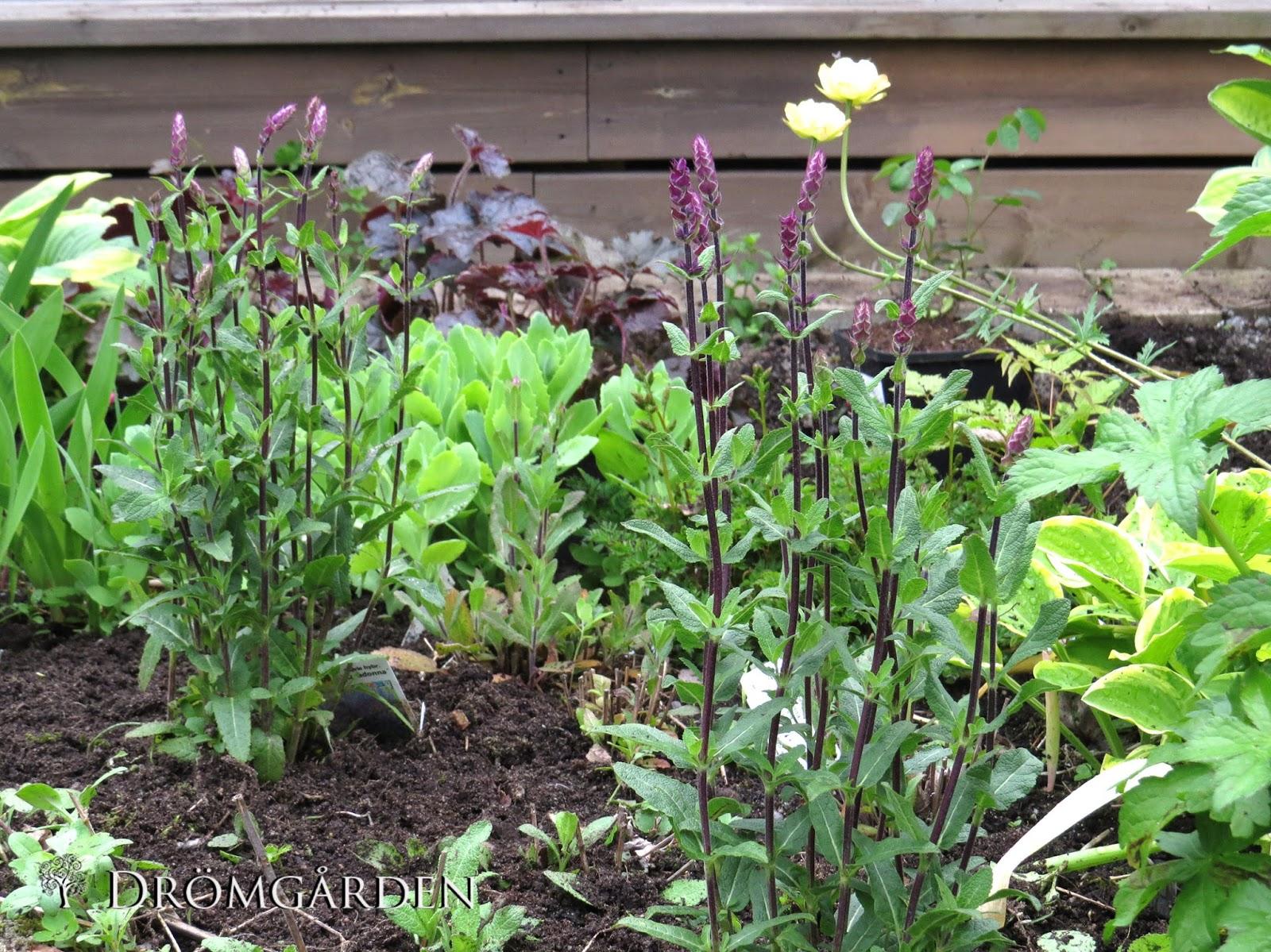 Drömgården: trädgårdsakuten