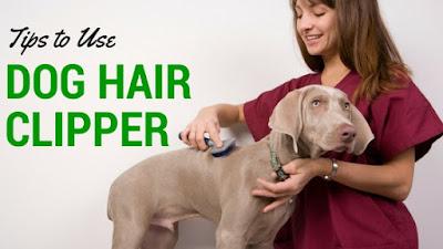 Dog hair clipping tips