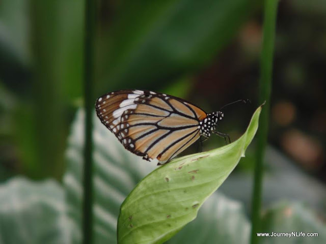 Bangalore National Butterfly Park