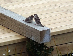Baby sparrow on the deck, squawking until it got fed