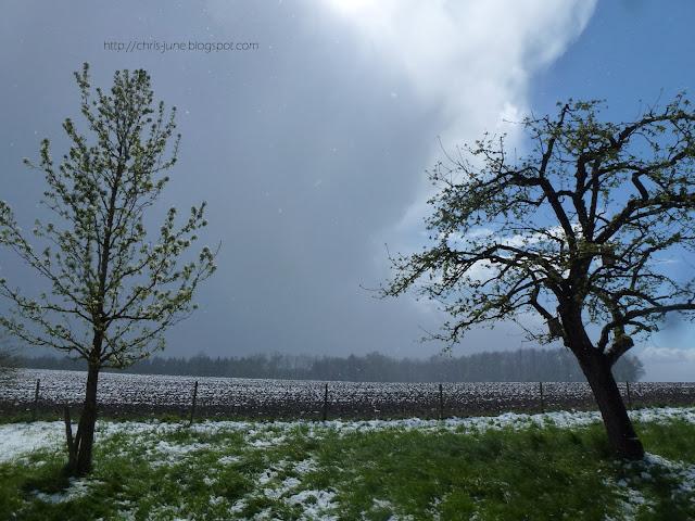Aprilwetter mit Schneeschauer - Obstbäume