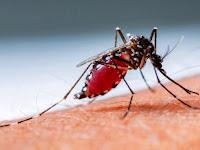 9 Solusi Rumah yang Efektif untuk Chikungunya