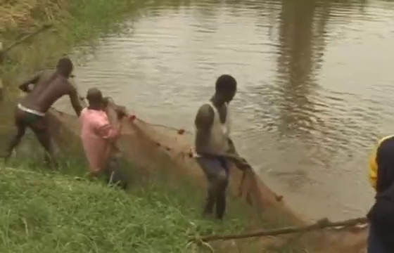 fish farm nigeria harvest big catfish in earthen pond picture