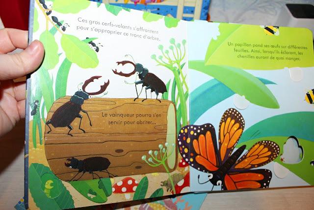livre insecte ludique