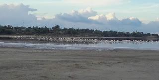 a long line of flamingoes on Larnaka salt lake