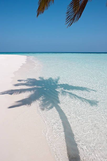 shadow of a palm tree in the shallows of the sea on a white sand beach