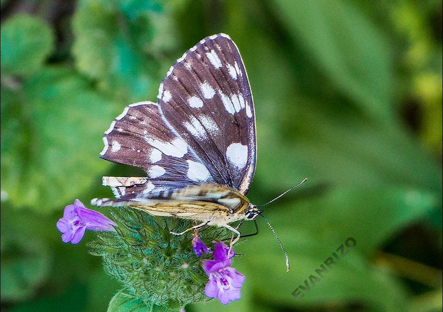 Από πεταλούδα σε λουλούδι και σε ζουζούνι