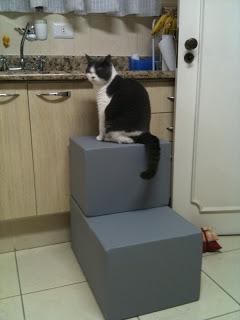 gatos na pia da cozinha