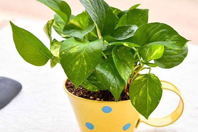 पैसा plant123
