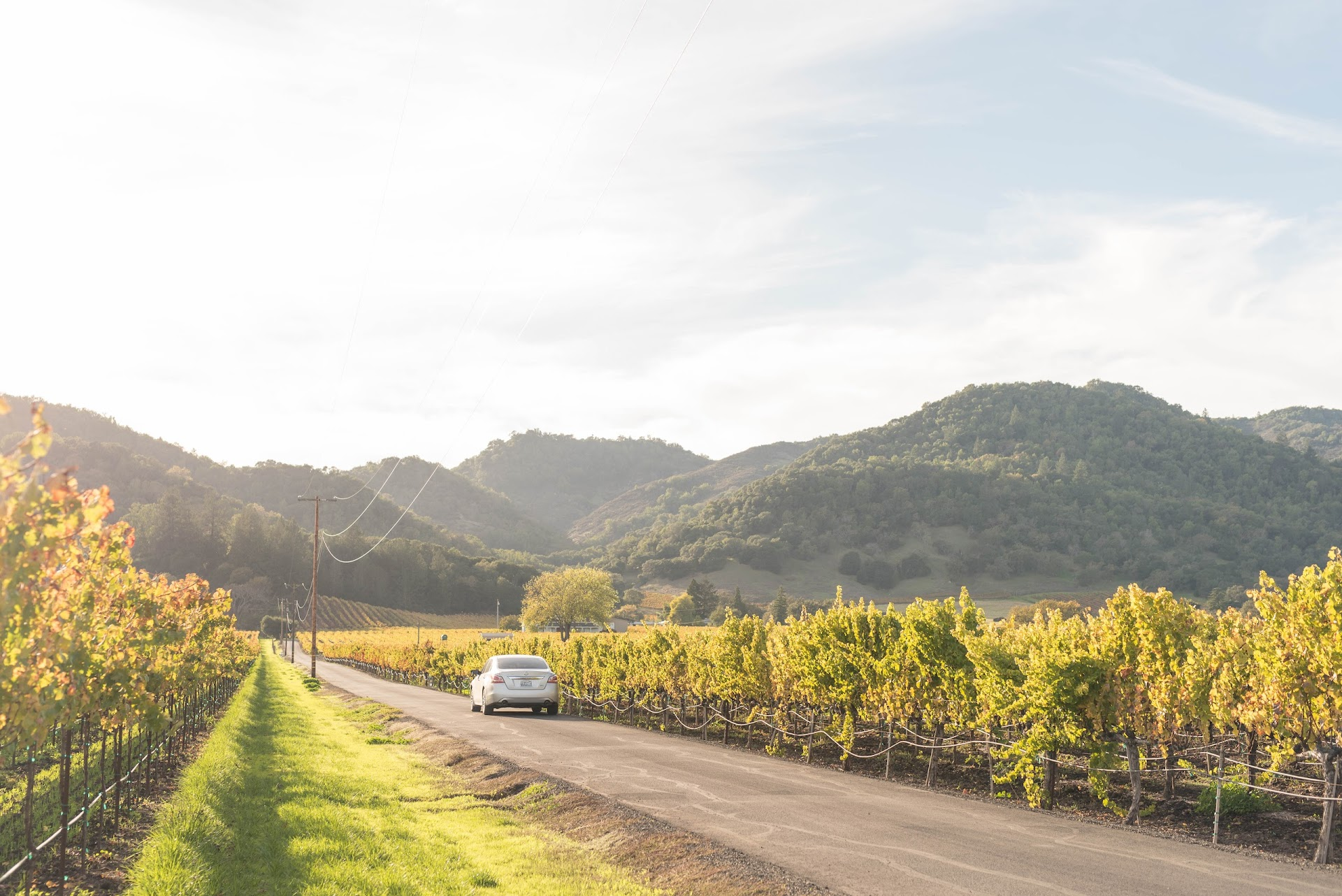road trip, cheap tips, how to save money on road trips, california, napa valley, yountville, photography, car, vineyards, fall in napa, autumn