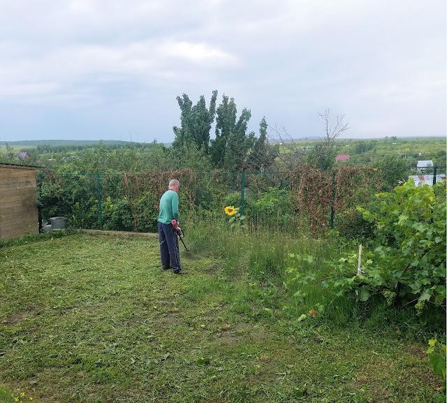 мои 92 дня лета, муж с утра пораньше торопится скосить траву