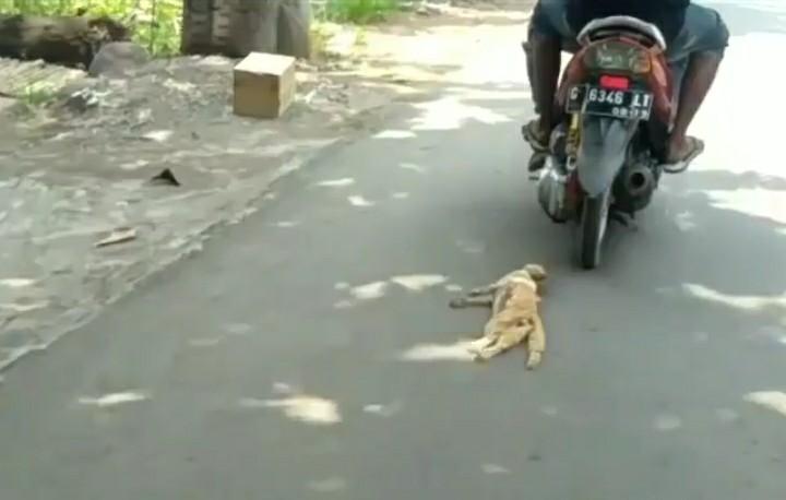 Kejam,  Pengendara Motor Menyeret Kucing di Jalan Raya