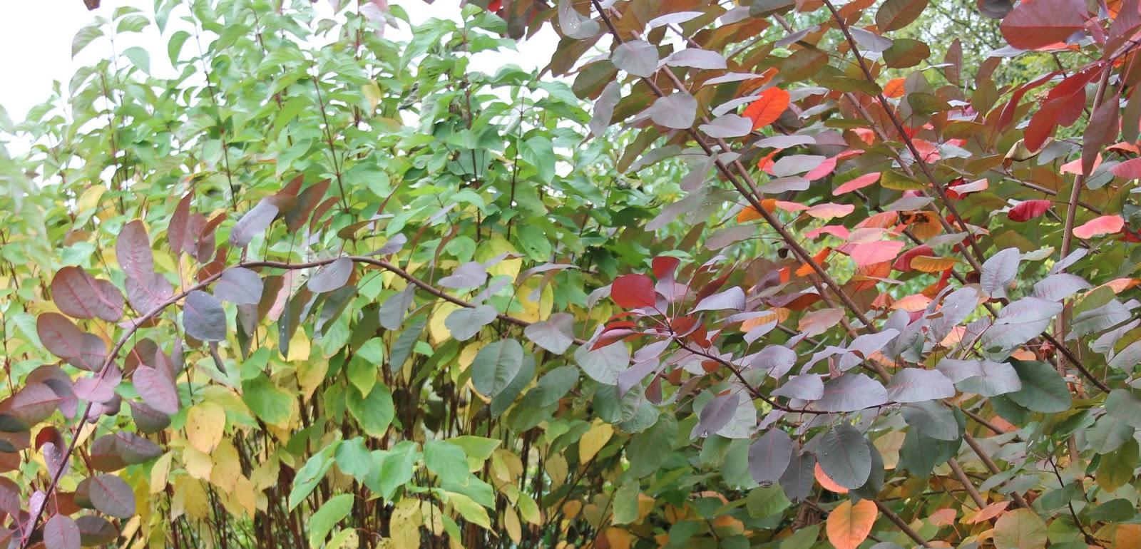 Doubs jardin couleurs d 39 automne for Jardin octobre