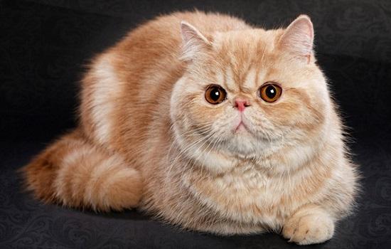 kucing cantik dan imut