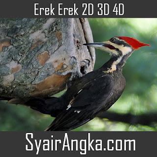 Erek Erek Burung Pelatuk di Buku Mimpi 2D 3D 4D Lengkap