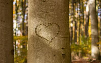 simbol hati di pohon