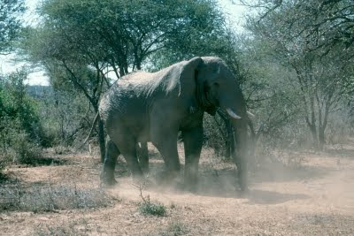 South Africa, elephant, wildlife, conservation