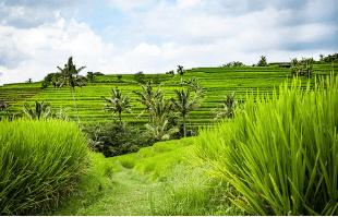 Liburan Bali