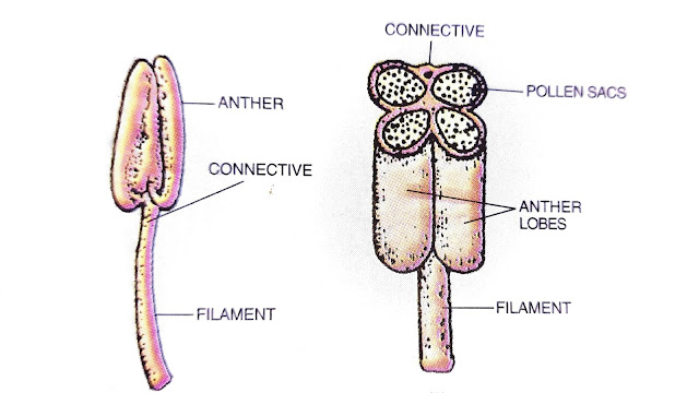 structure and functions of flower