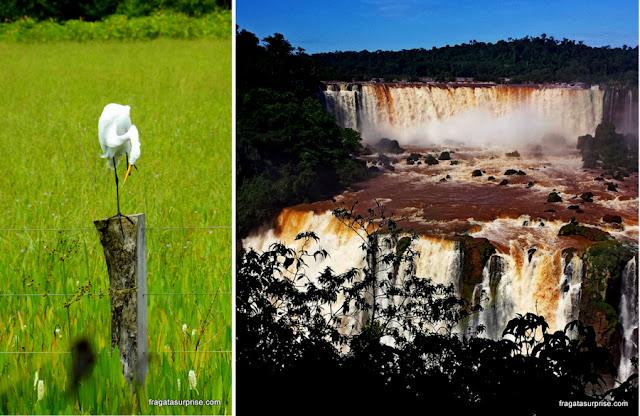 Férias de julho no Brasil - Pantanal e Cataratas do Iguaçu