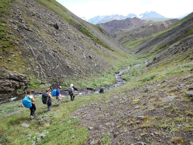 First dinosaur bones found in Alaska's Denali National Park