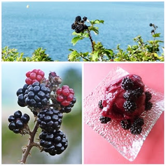 wild cornish blackberries to make a sorbet