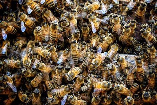Honey Harvest: When To Harvest Honey?