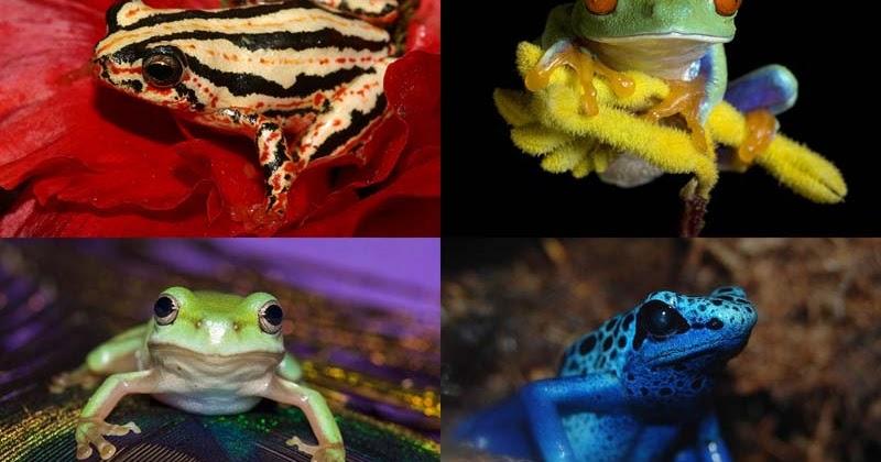 Все обо всем: Несколько фактов о лягушках